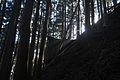 Winter forest - panoramio - Babiesan.jpg