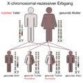 X-chromosomal-rezessive-Vater.png