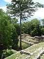 Yaxchilan with big tree.jpg
