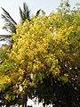 Yellowish tree.jpg