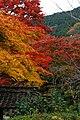 Yoshimine-dera (8255249769).jpg