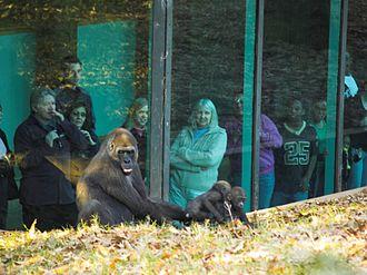 Zoo Atlanta - The gorilla exhibit
