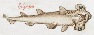 Zugaina - Burney MS 97.png
