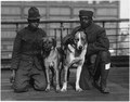 """German Dogs"" Crown Prince and Kaiser Bill ,two German dogs that were captured by Privates Robinson . . . - NARA - 533623.tif"