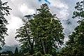 Алишаньский Национальный Природный Парк (2).jpg