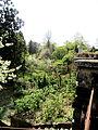 Бонанічний сад УжНУ.JPG