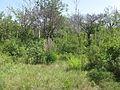 Дендрологічний парк 448.jpg