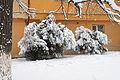 Зима .Гор.скверь Мукачево.JPG