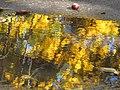 Ковалівський парк. Осіння калюжа.jpg