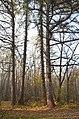 Колекція лісовода Вінтера.jpg