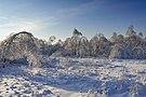 Ледяной лес.jpg