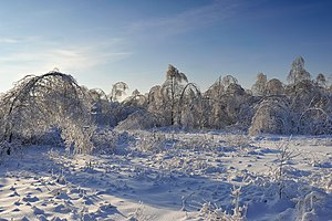 Moscow Oblast - In winter
