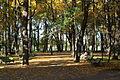 Летний сад. Осень. Фото 2008 года..JPG