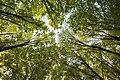 Лісництво, Сторожинецький район 4.jpeg