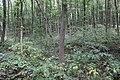 Могильник ґрунтовий з трупоспаленням Городниця VІ.jpg
