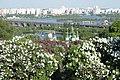 Панорама квітучої сирені на фоні р. Дніпро.jpg