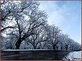منظره زمستانی از جاده روستای نوا - panoramio.jpg