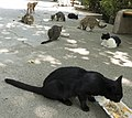 گربه -تهران-cat in iran 13.jpg