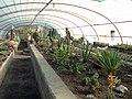 گلخانه کاکتوس دنیای خار در قم. کلکسیون انواع کاکتوس 06.jpg