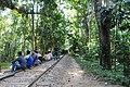 লাউয়াছড়া জাতীয় উদ্যান 10.jpg