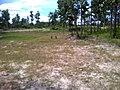 """ก่อนเป็น""""สวนสุนนท์กุล """"บ้านแก่งเค็ง - panoramio.jpg"""