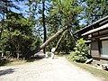 天橋立 - panoramio (2).jpg