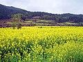 婺源映像(Wuyuan)-21 - panoramio.jpg