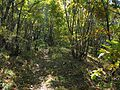 林间小径 - Jungle Path - 2012.10 - panoramio.jpg