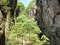 永嘉崖下库风光 - panoramio (1).jpg