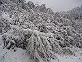雪景 - panoramio (2).jpg