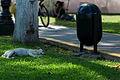00242 Perro y basurero.jpg
