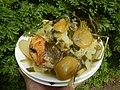 0099Nilagang repolyo, petsay Tagalog, kamote, patatas, kamatis at Pritong Dalag (Bulig) sa tanglad 40.jpg