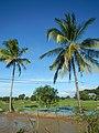 02261jfBalucuc Pulilan Paddy Bridge Fields Apalit Pampangafvf 16.JPG