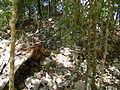02Cobá - Ruins unexcavated.jpg