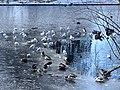 1085.Noorderplantsoen.Park.Ijs.Winter.Schaatsen.Sneeuw.Groningen.jpg