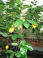 11. St. Petersburg. botanical garden.JPG