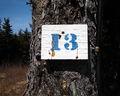13 tree.jpg