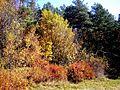 15Різнобарв'я осені.jpg