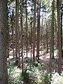 18.07.2015. Wildfreizeitpark Oberreith, 83567 Unterreit - panoramio (17).jpg