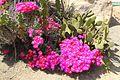 1935 (Old) Cactus Garden 5.JPG