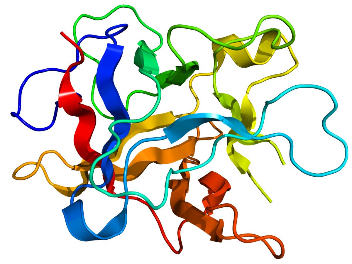 Kunitz STI protease inhibitor - Wikipedia