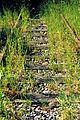 20010524 Maastricht; overgrown tracks of Railway line (Spoorlijn) 20 Hasselt - Maastricht.jpg