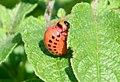 2006-07-16 larve2.jpg