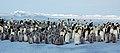 2007 Snow-Hill-Island Luyten-De-Hauwere-Emperor-Penguin-07.jpg