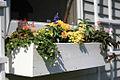 2007 flower box 514957000 f4cf3667da b.jpg