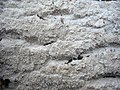 2011-12-24 Crustomyces subabruptus (Bourdot & Galzin) Jülich 191237.jpg