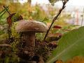 2012-10-24 17-24-22-fungi.jpg