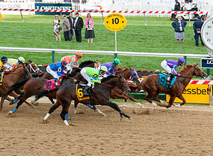 Thoroughbred horse racing - The start of the 2014 Preakness Stakes, an American Thoroughbred horse race.