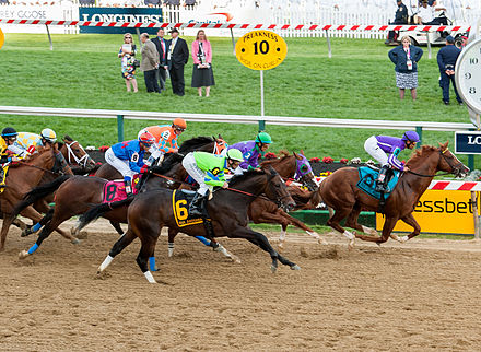 The start of the 2014 Preakness Stakes, an American Thoroughbred horse race. 2014 Preakness Stakes start.jpg