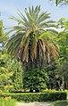 2014 Suchum, Ogród botaniczny (39).jpg